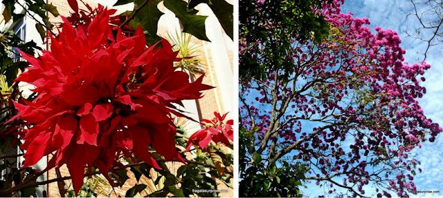 Brasília verde - floradas
