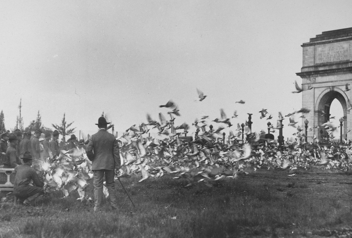 Original caption: Carrier pigeons are being trained for service with the armies abroad and here. A pigeon section of the Signal Corps has been established under the command of Major Griffith, and a flight was held in May of 1918, from Washington to New York. A flock of 3,500 birds made the trip.