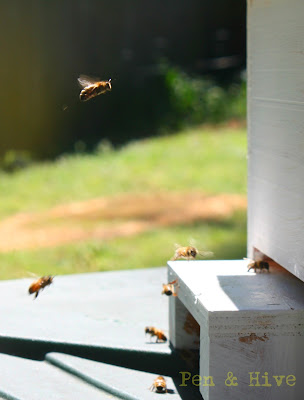 catching a swarm