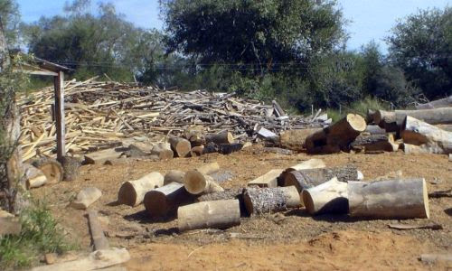 Resultado de imagen para PARAGUAY: LA TIERRA PARA LOS DELINCUENTES AMBIENTALES