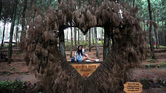 Salah satu spot di Hutan Pinus Gogoniti
