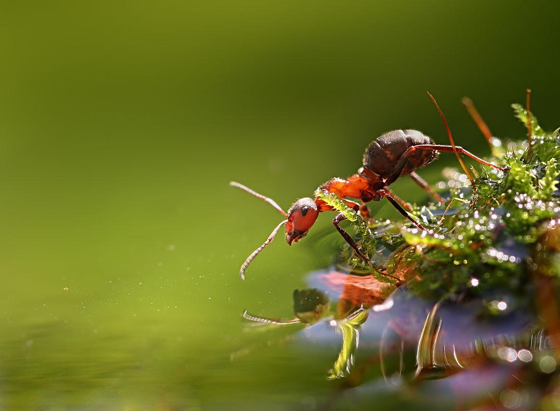 rumah hikmah semut nabi sulaiman as katak dan ulat
