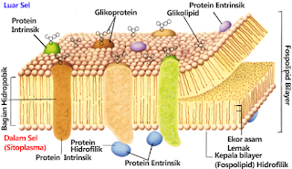 Penterangan Sel Sebagai Unit Terkecil Kehidupan dan Bioproses Pada Sel Penterangan Sel Sebagai Unit Terkecil Kehidupan dan Bioproses Pada Sel