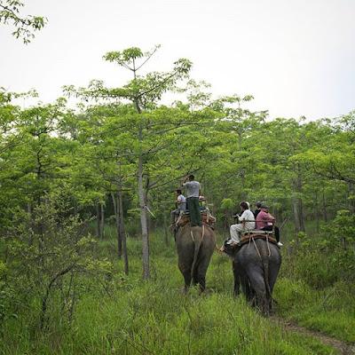 Elefante recorriendo uno de los caminos de Chitwan