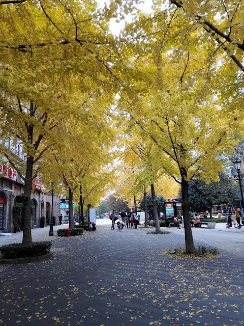 金色に紅葉した黄金城道のイチョウ並木