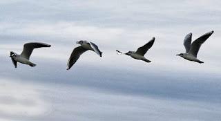 foto di gabbiano che vola