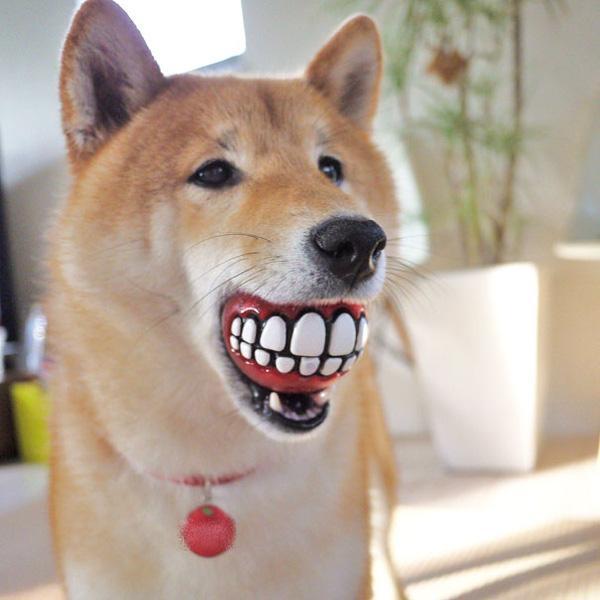 Lựa chọn đồ chơi an toàn cho cún
