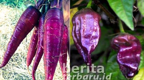 khasiat buah berwarna ungu
