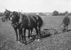 Photograph of Jack Honour ploughing September 1914