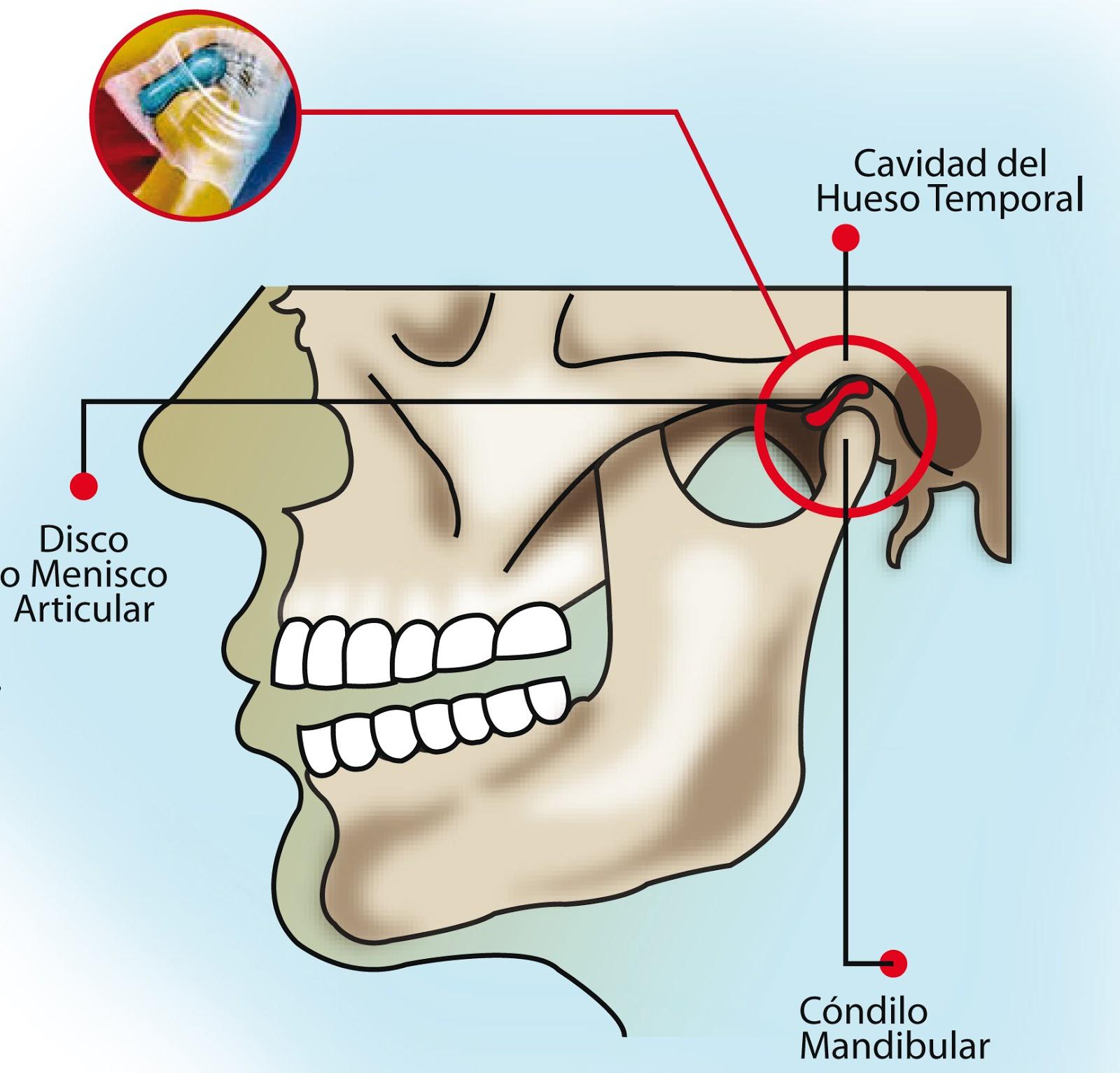 Enfermera Curiosa : Preguntas EIR 2003 - Anatomía Humana