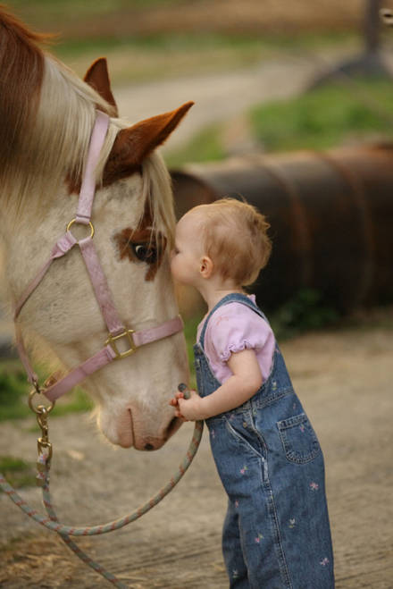 Horse Quotes Header Wallpaper Lovely Babies And Pets Pictures To Download Free Cute