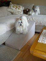 cãozinho maltes