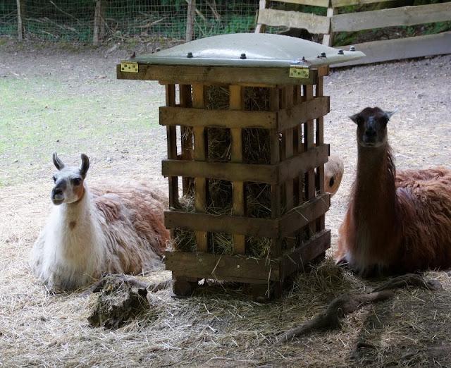Fünf weitere Ausflugsideen im Schwentinental. Unsere Kinder lieben den Wildpark Schwentinental, u.a. mit Lamas und Schafen.