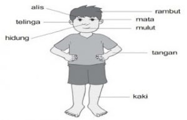 Arti Kedutan Lengkap Menurut Primbon Jawa