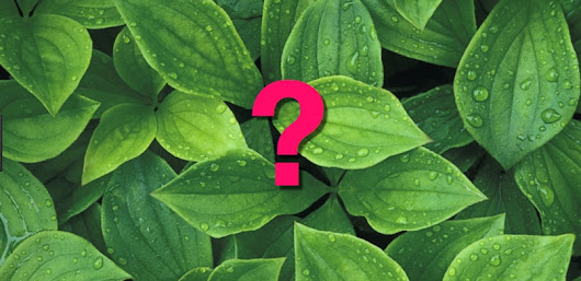 SearchResearch Challenge (7/5/2017):  An important plant that's now extinct?