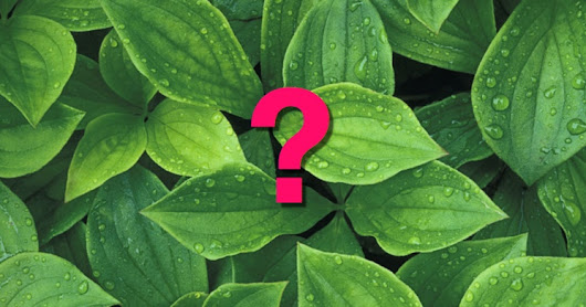 Answer: An important plant that's now extinct?