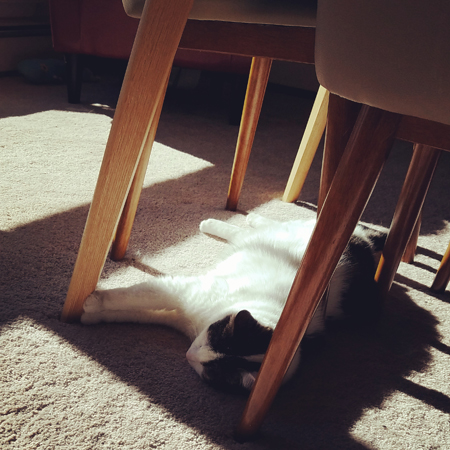 image of Olivia the White Farm Cat napping under the dining room table
