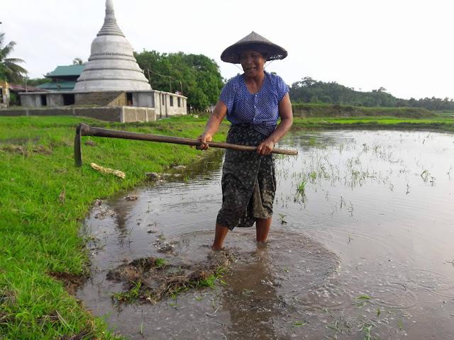 ထက္ေခါင္လင္း (Myanmar Now) ● ရခိုင္ကမ္းရိုးတန္းေတာင္သူတို႔အတြက္ မရိွမျဖစ္ တာတမံမ်ား