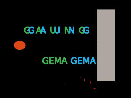 Perbedaan Gaung dan Gema Beserta Contoh Lengkap Perbedaan Gaung dan Gema Beserta Contoh Lengkap