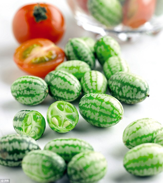 Cucamelons are not modified and have grown naturally in Mexico for centuries.