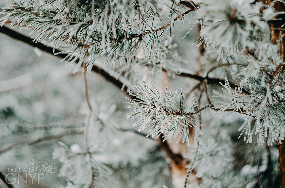 zdjęcia w lesie, zimowy las, kozłowiecki park krajobrazowy