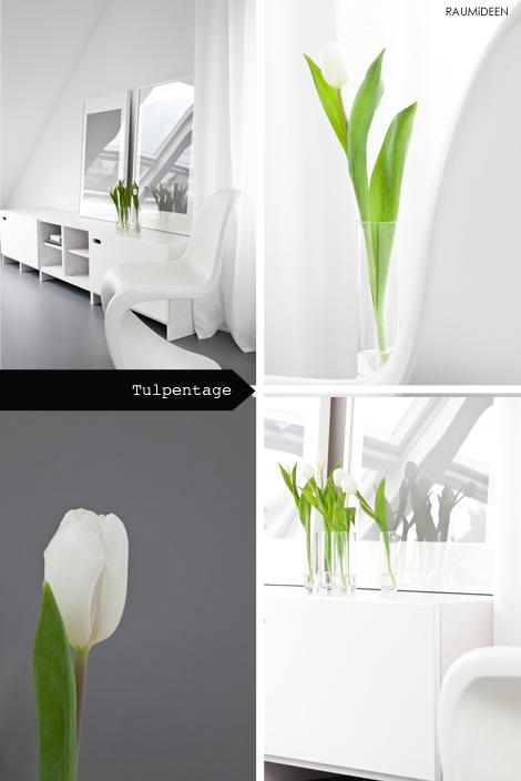 Weiße Tulpen in Glasvasen, eine Deko-Idee.