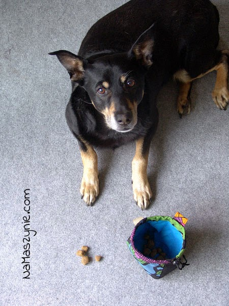 Woreczki na psie smakołyki, saszetka, woreczek, smakołyki, psie, na pasek, zaciągany, charytatywny, z podszewką, do prania w pralce,