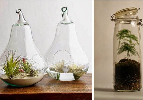 de tout et de liens blog culture et lifestyle terrarium ou jardin sous verre. Black Bedroom Furniture Sets. Home Design Ideas