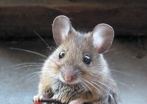 Картинки все типов с мишками с природой