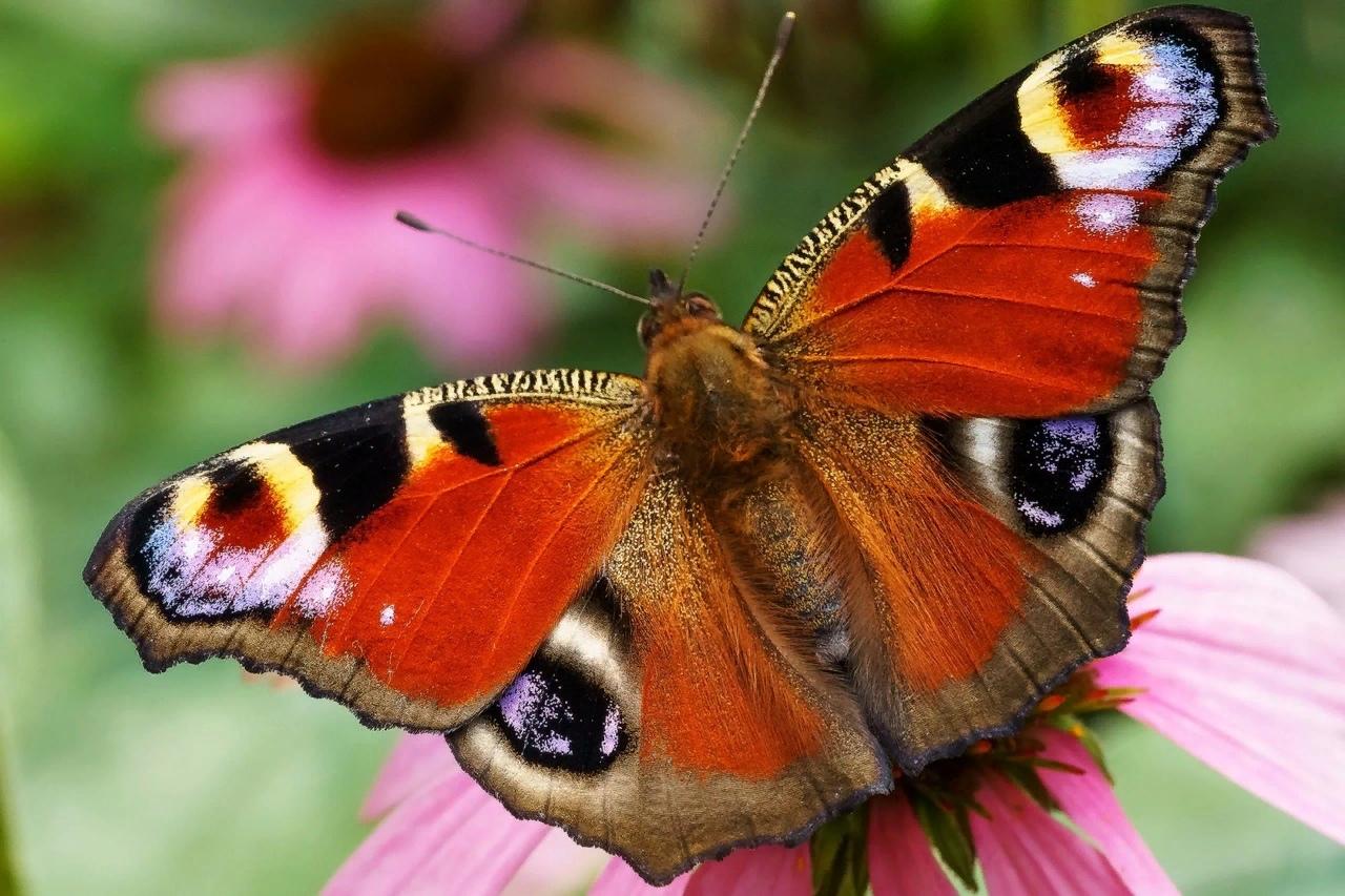 Картинки про бабочек с названиями