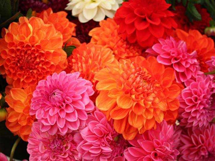 bir buket çiçek fotoğrafı