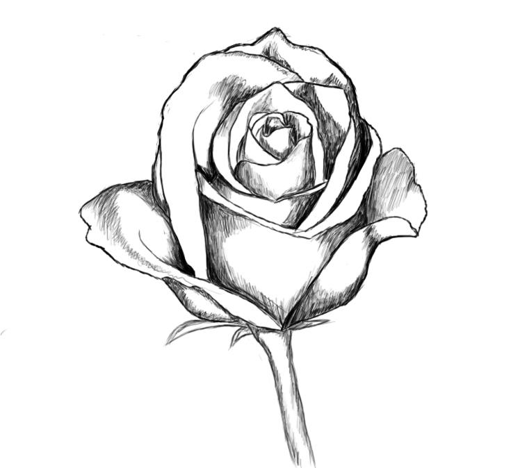 Rose Drawing | 3D Drawing