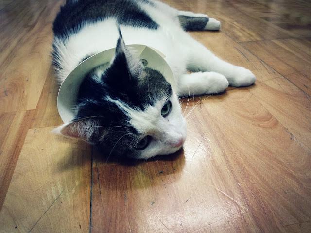 KIRIN- 貓咪伊莉莎白項圈