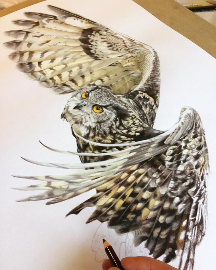 02-Owl-in-Flight-Tom-Strutton-Animal-Drawings-www-designstack-co