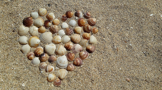 Heart Shape Sea Shells  HD Wallpaper