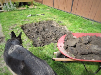 dry well dirt digging wheelbarrow backyard water drainage
