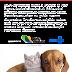 Campanha de vacinação anti rábica em Porto Seguro será neste sábado