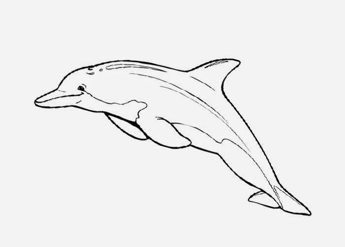Delfin Wob