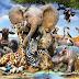Umbanda não Sacrifica Animais - Alerta