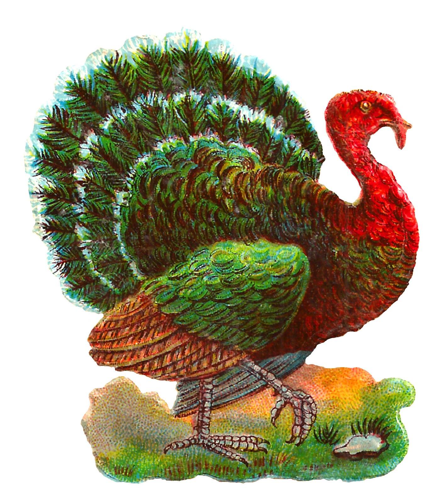 Antique Images: Vintage Thanksgiving Turkey Digital Bird ...