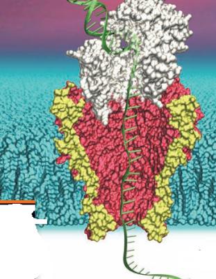 Tahapan Sekuensing DNA menggunakan metode next-generation sequencing, Tahapan sekuensing DNA menggunakan Metode Sanger, sekuensing adalah, sequensing adalah, sekuensing DNA generasi ke tiga, Sekuensing DNA menggunakan Metode Sanger dan Metode Next-Generation Sequencing, Metode Sekunsing DNA generasi ke 3