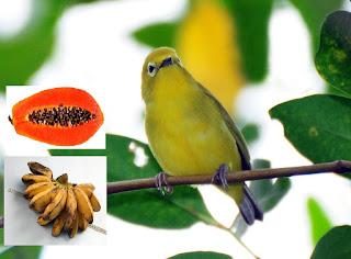 manfaat buah dan sayuran murah untuk pleci