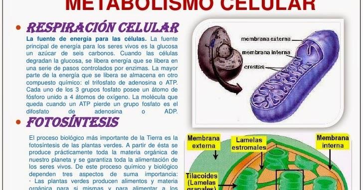 No tengas miedo de cambiar lo que estás Metabolismo basale