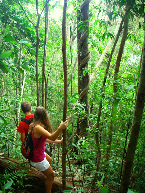 djungelvandring på Koh Chang