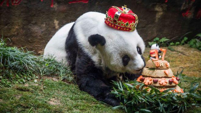 World's oldest captive panda Basi dies in China