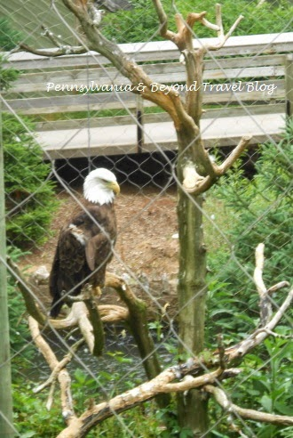 ZooAmerica - North American Wildlife Park and Zoo