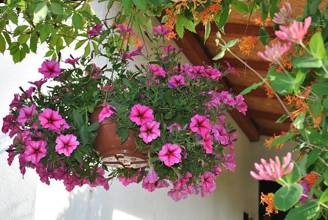 Las mejores plantas con flor para el verano