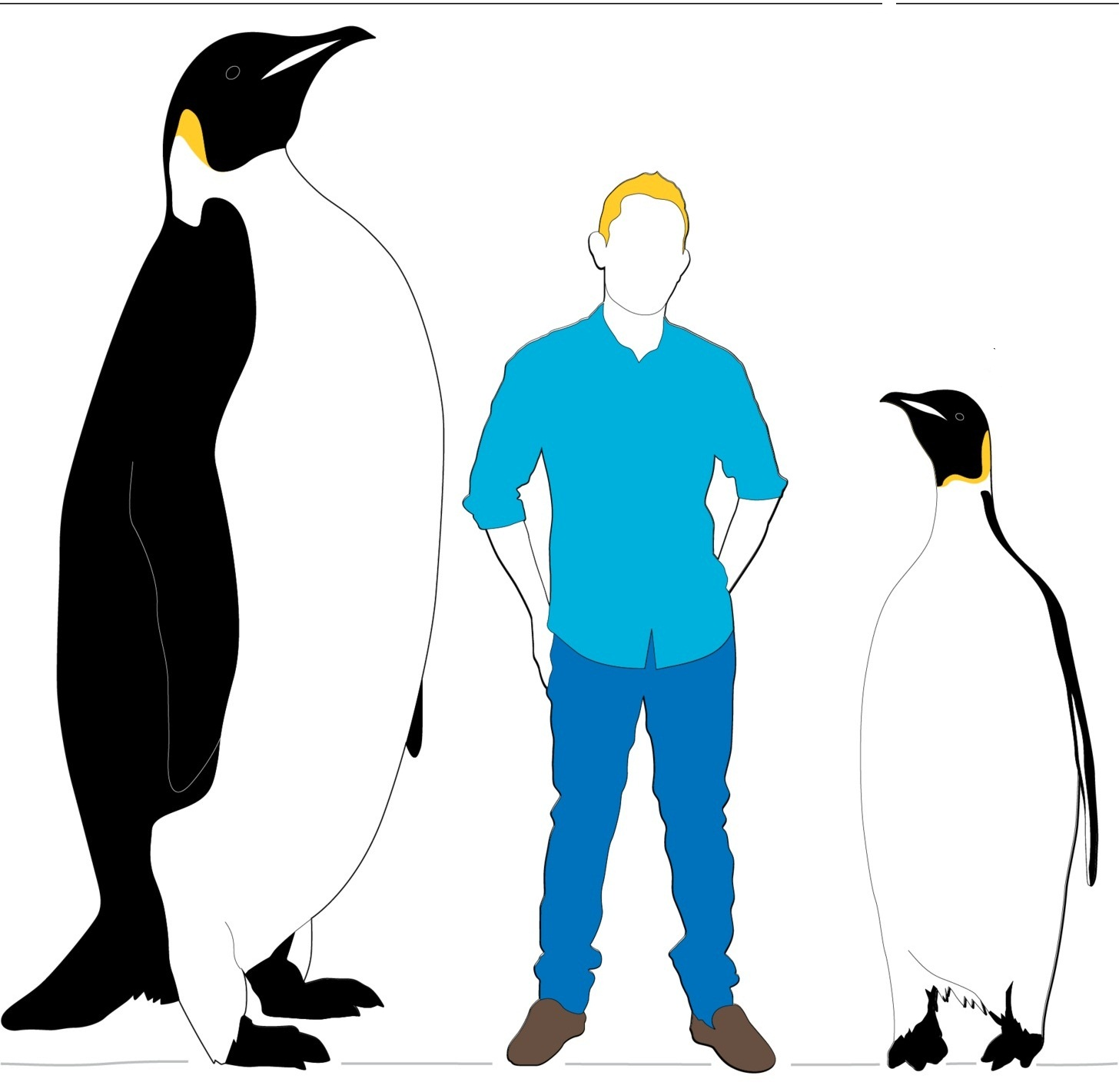 Ancient penguin discoveries and evolution essay
