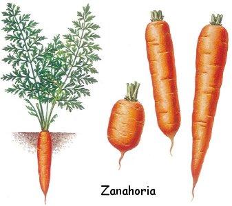 El ser es conciencia la zanahoria sus propiedades for La zanahoria es una hortaliza