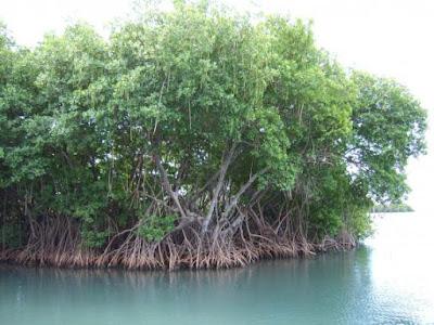 bagian-bagian akar, fungsi akar, bagian bagian akar monokotil dan dikotil,  bagian bagian akar dan fungsinya,  bagian bagian akar serabut,  bagian bagian akar yang dilalui oleh air,  bagian akar tumbuhan,  pengertian bagian bagian akar